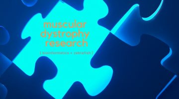 muscular dystrophy research bioinformatics plus zebrafish