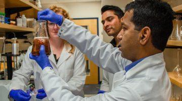 Balu Nayack studies seaweed in lab