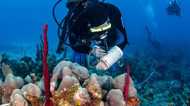 Marine Diver taking notes of coral reef