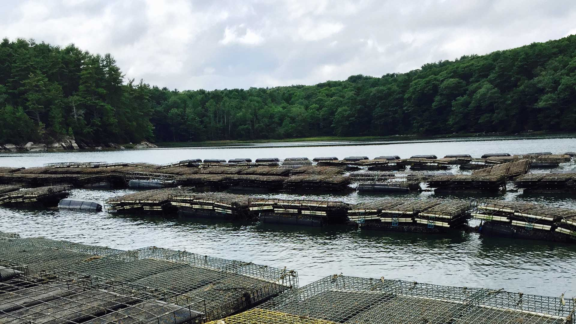 oyster farm in the Damariscotta River image