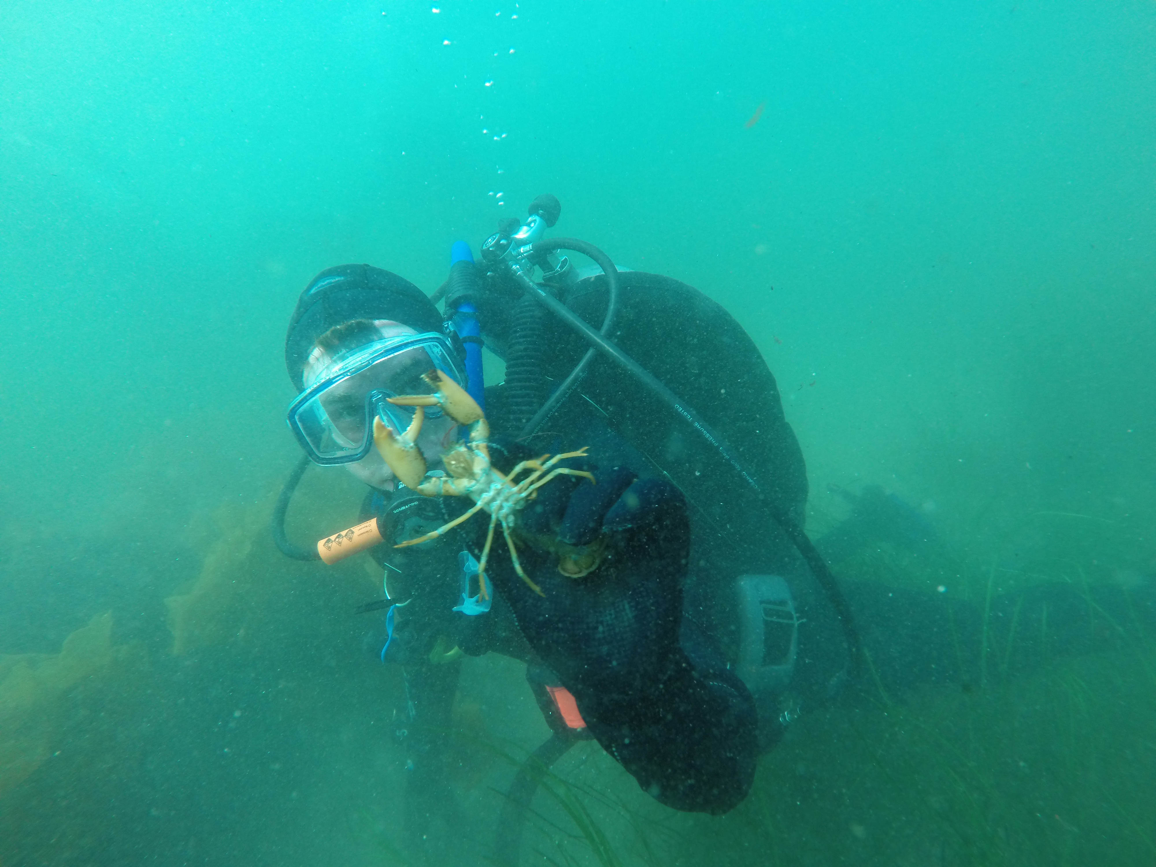 Scuba Diving, UMaine Marine Research