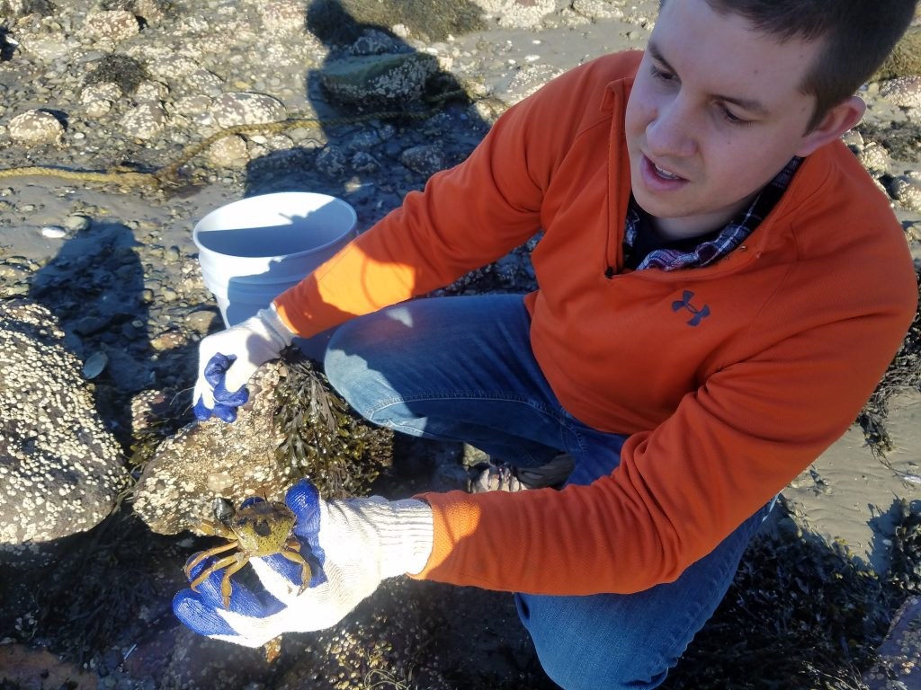 Tyler Van Kirk hold green crab
