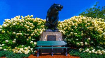 Statue of black bear on UMaine mall