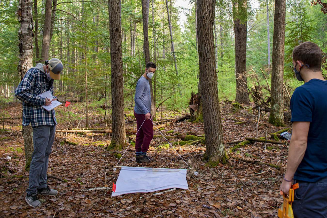 Ecology and environmental sciences students examined vegetation, wildlife and abiotic associations of ticks on campus. They also sampled ticks to kickoff for a long-term monitoring project on campus.