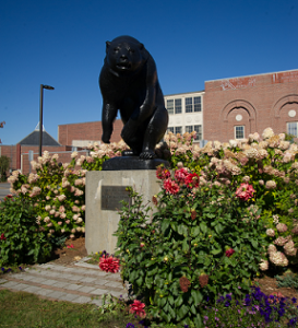 Photo of the UMaine Black Bear statue