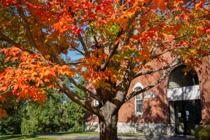 Photo of fall colors outside Fernald Hall