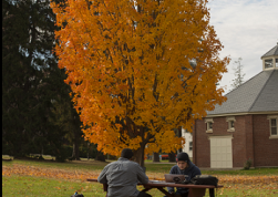 Fall colors outside the Pavillion