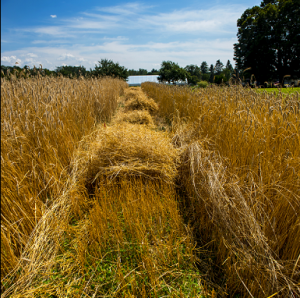 Image of mowing the fields at the research farm