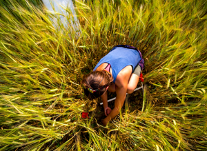 Student conducting research in a field of grain