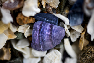 Close up image of a shell midden