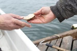 Oyster at Aquaculture Boot Camp