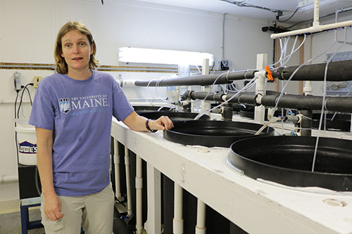 Heather Hamlin in the lab