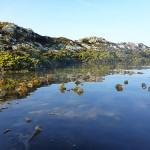 kelp bed near island