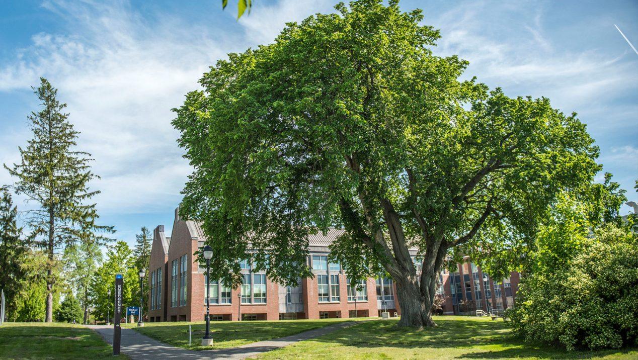 Campana Elm tree outside hitchner hall