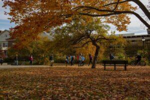 Umaine campus photo