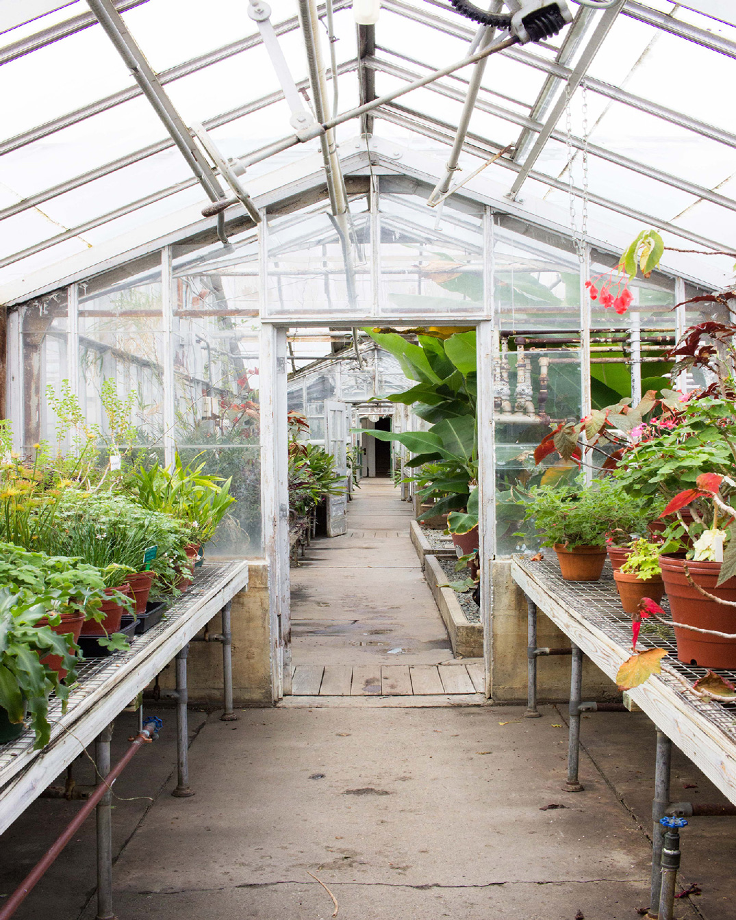 Clapp Greenhouse Photography