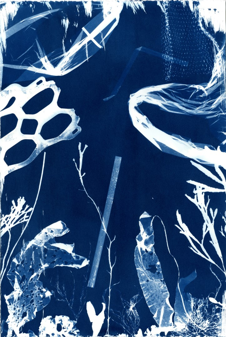 Cyanotype Impressions of the Atlantic Ocean in Maine