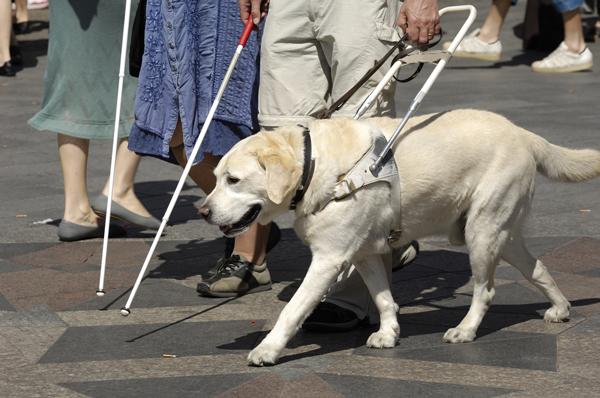 Service dog walking