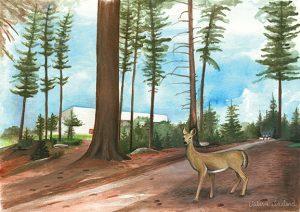 Summer University 2019 poster image depicting woods behind Rec Center and deer