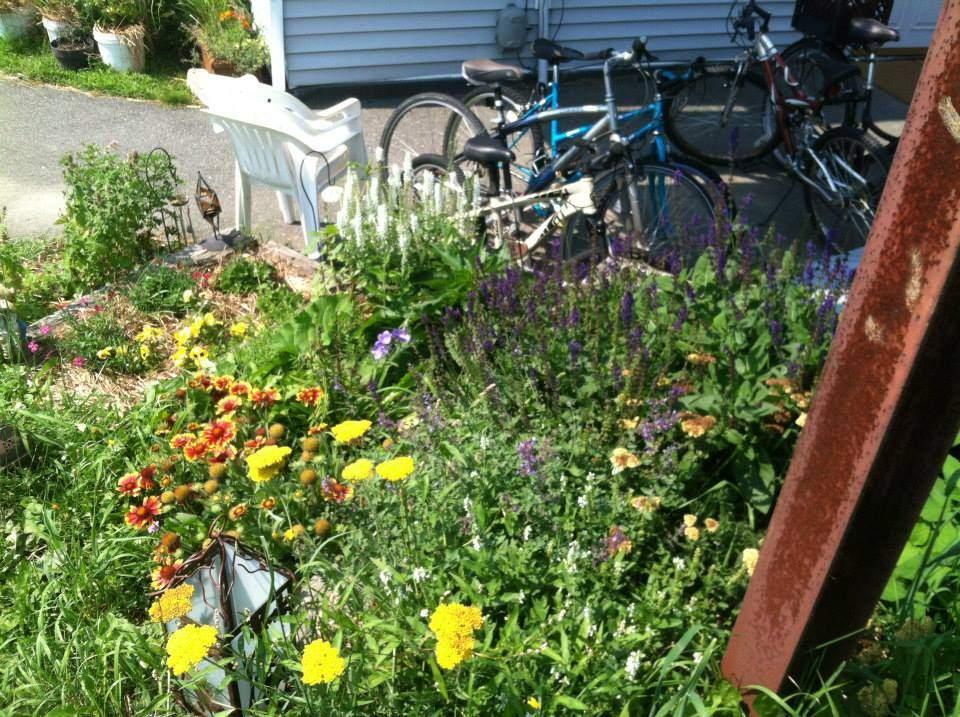 Pollinator garden photograph