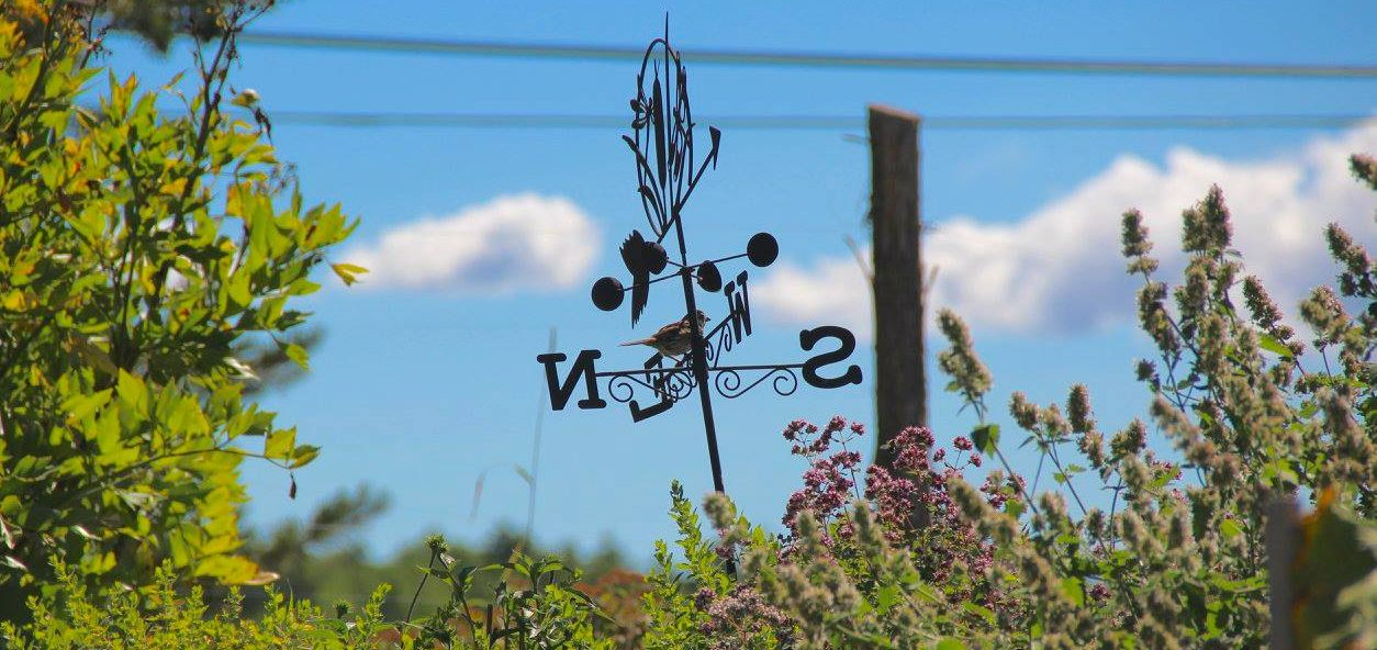 A bird sitting on the weather-vane in the Terrell House garden