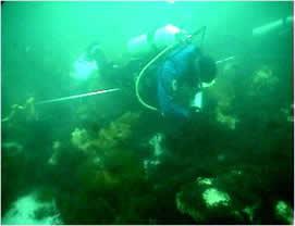 Scuba Diving in Maine