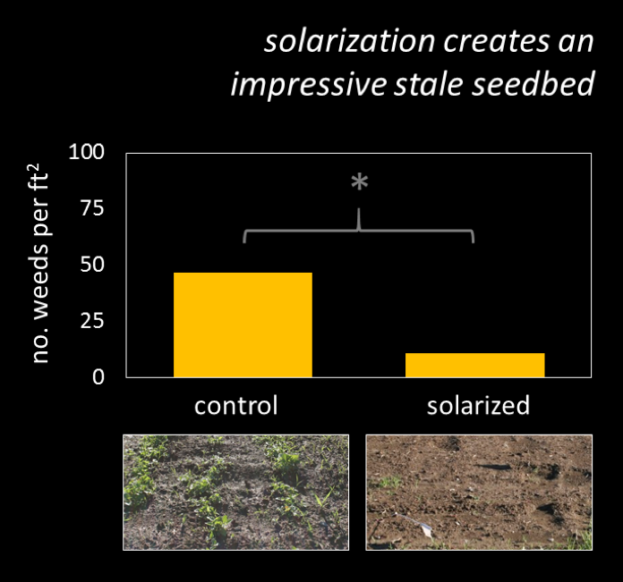 solarization creates an impressive stale seedbed
