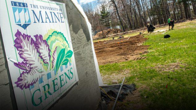 UMaine Greens