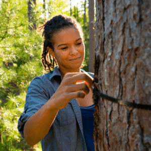 Woman measures tree circumfrence in forest