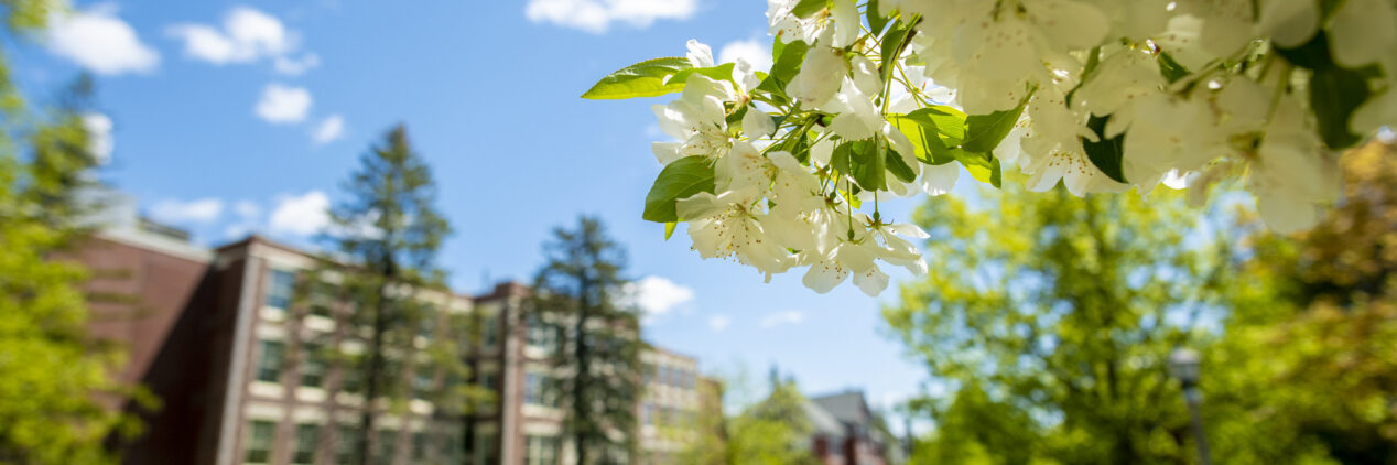 Photo of university campus in spring