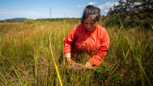 A woman gathers sweetgrass in a field